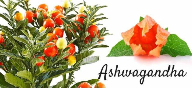 Ashwagandha-for-Diabetes-870x400