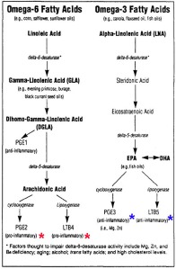 omega-6-vs-omega-3-metabolism1